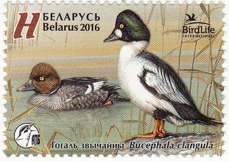 Почтовая марка Птица года. Гоголь обыкновенный.