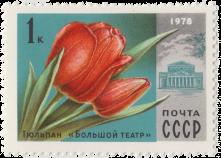 Тюльпан «Большой театр»