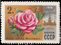 Роза «Утро Москвы»