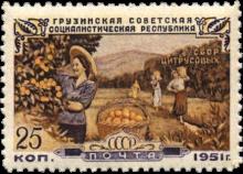 Сбор цитрусовых