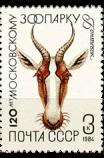 Антилопа бонтебок