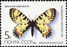 Зеринтия кавказская