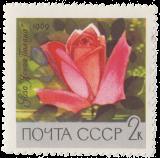 Роза «Ясная поляна»