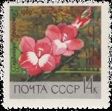 Гладиолус «Уралочка»