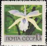 Орхидея Коттлея