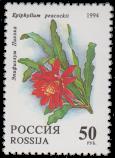 Эпифиллум Пикока