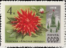Георгина «Красная звезда»