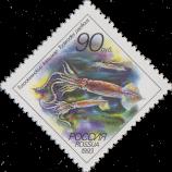 Тихоокеанский кальмар