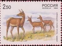 Изюбрь-самка с молодыми оленями