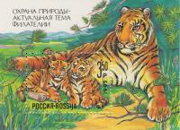 Амурская тигрица с тигрятами